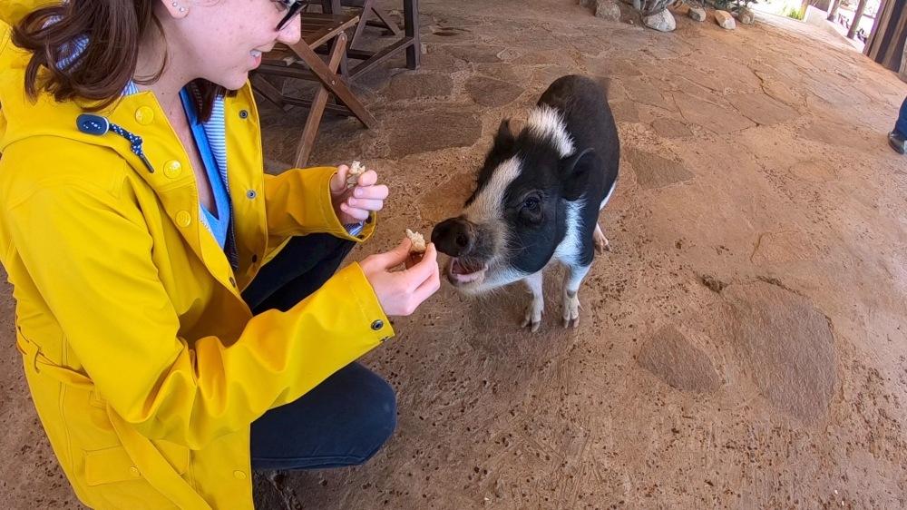 bree pig